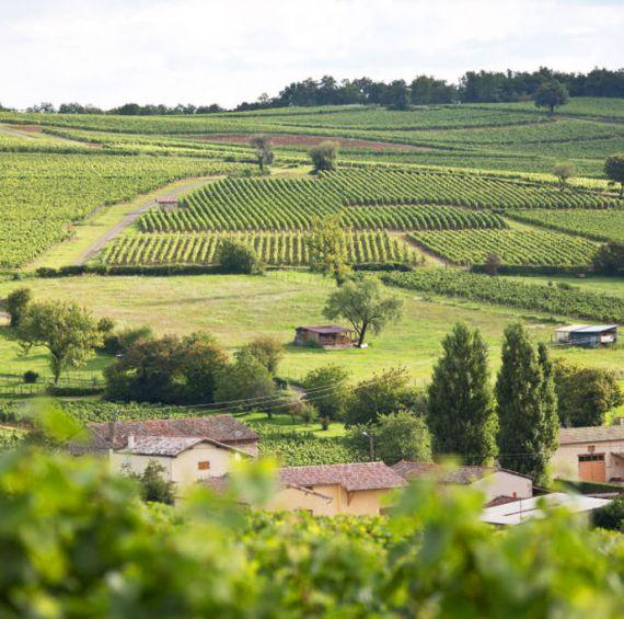 vins macon typicité